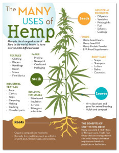 Uses of Hemp