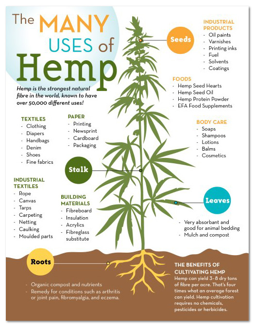 Hemp facts infographic
