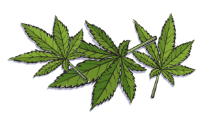Hemp vs. Marijuana - Hemp_leaves